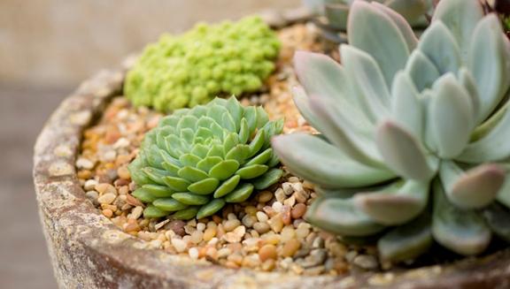 Kaktus melakukan fotosintesis pada organ 1